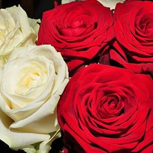 Rose & Flower