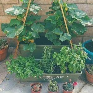 kim-E-herb-garden