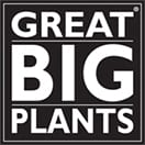 Organic Fertilizer and Compost Extract | Great Big Plants LLC
