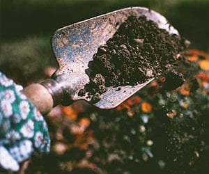 What Are The Benefits Of Using Compost