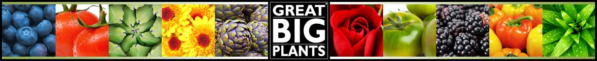 Great Big Plants LLC